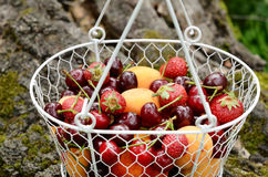 Picknick mit Mischbeeren und Früchten Lizenzfreies Stockbild