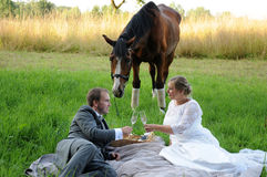 Picknick mit Pferd Stockfotografie