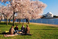 Picknick onder Cherry Blossoms in Washington DC stock foto