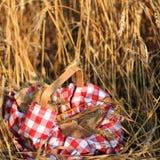 Picknick op gebied Royalty-vrije Stock Fotografie