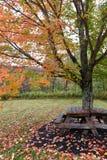 Picknick-Stelle Lizenzfreies Stockfoto