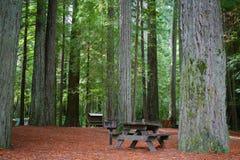 Picknick-Tabelle im Rotholz-Wald Lizenzfreies Stockbild