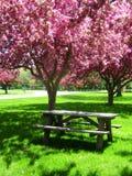 Picknick-Tabelle unter rosafarbenen blühenden Bäumen Stockbilder