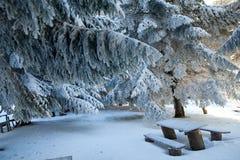 Picknick tijdens wintertijd, Bulgarije Royalty-vrije Stock Afbeeldingen