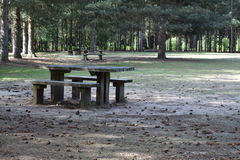 Picknickbank in het hout Royalty-vrije Stock Foto