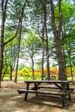 Picknicken bordlägger i parkera Arkivbild