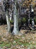 picknicken tables trees Arkivbild