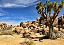 Picknickområde på Joshua Tree Park Arkivbilder