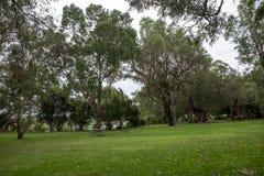 Picknickpark und -Gehweg nahe Loch McNess See in Yanchep Na stockbilder