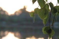 Picknickplats sjö picknick, natur som är utomhus- Arkivfoton