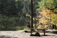 Picknicktabelle am Campingplatz im pazifischen Nordwesten. stockfotografie