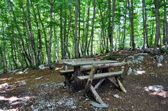 Picknicktabellen i skogen arkivbild