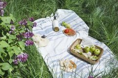Picknicktid i parkerar Flaska av vin, äpplen, smörgåsar, salami, kakor på den vita filten på det gröna gräset royaltyfri foto