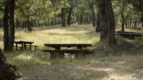 Picknicktische in Forest Empty To Use stock footage