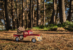 Pickup Pine Cone Royalty Free Stock Photo