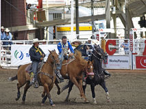 Pickup riders. Here the pickup riders are helping the cowboy of the bronc after his bucking ride in the calgary stampede witch is hailed as the greatest out Royalty Free Stock Images
