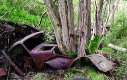 Pickup truck from around 1950s left on car cementery in the forest Småland, Sweden. stock images