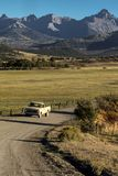 Pickup truck drives County Road 24 near Ridgway Colorado looking stock image
