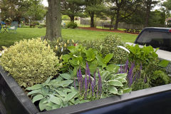Pickup Truck Filled with Plants Royalty Free Stock Image