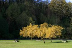 picnic περιοχής Στοκ εικόνες με δικαίωμα ελεύθερης χρήσης