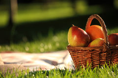 Picnic. Basket with fruits on grass in summer park stock photography