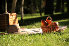 Picnic. Basket with fruits on grass in summer park royalty free stock image