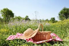 Picnic. On meadow at sunny day Stock Image