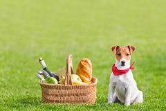 Picnic. Basket on green lawn Royalty Free Stock Photo