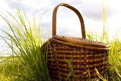 Picnic. Basket for picnic in grass Royalty Free Stock Photography