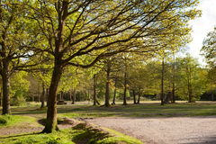Picnic area in Abbots Wood, East Sussex, England Stock Image