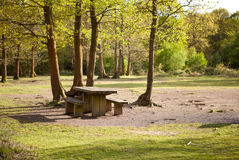 Picnic area in Abbots Wood, East Sussex, England Stock Photography