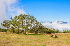 Picnic area with big tamarin tree on the Dimitile mountain Royalty Free Stock Images