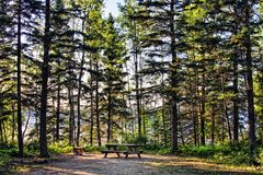 Picnic Area in Forest Stock Photography