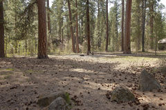 Picnic area in the forest central Oregon. Stock Photos
