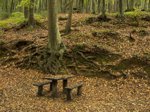 Picnic Area in the Forest Royalty Free Stock Photography