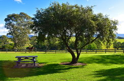 Picnic Area. A picnic area with a horse Stock Photos