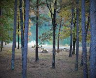 Picnic area by lake under tall trees Royalty Free Stock Photos