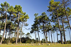Picnic area in marine pine forest in Yeu island Stock Images