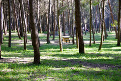 Picnic area in the park Royalty Free Stock Photography