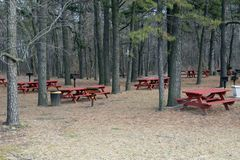 Picnic Area with Pines. A picnic area with several picnic tables in a pine forest Royalty Free Stock Photography
