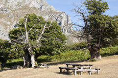 Picnic area Royalty Free Stock Images