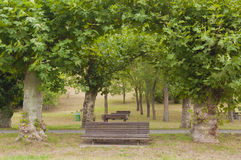 Picnic area. Trees, tables and barbacues in the park Royalty Free Stock Images