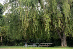 Picnic area. Two picnic tables under a weeping willow tree providing a quite shaded area for a meal outside Stock Photography