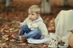 Picnic in the autumn forest Royalty Free Stock Images