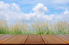Picnic Background with Picnic Table. Royalty Free Stock Images