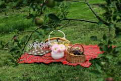Picnic basket on the blanket. Picnic Lunch Meal Outdoors Park Food Concept Royalty Free Stock Images