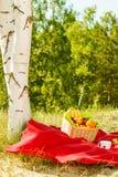 Picnic basket on blanket in woods Stock Image