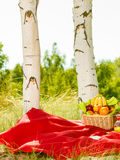 Picnic basket on blanket in woods Stock Photos