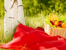 Picnic basket on blanket in woods Stock Photography