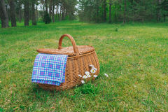 Picnic basket and blue white checkered napkin on forest lawn. Picnic basket and blue white checkered napkin on lawn with daisy flowers. Forest on background Royalty Free Stock Photography